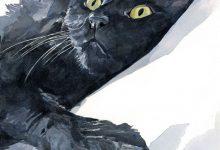 Show Me A Picture Of A Cute Cat Bilder 220x150 - Show Me A Picture Of A Cute Cat Bilder