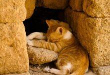 Show Me Cute Cats Bilder 220x150 - Show Me Cute Cats Bilder