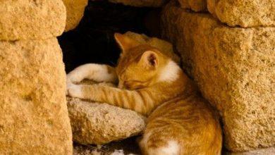 Show Me Cute Cats Bilder 390x220 - Show Me Cute Cats Bilder