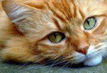 Show Me Photos Of Cats Bilder 220x150 - Show Me Photos Of Cats Bilder