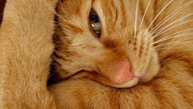 Show Me Some Pictures Of Cats Bilder 390x220 - Show Me Some Pictures Of Cats Bilder