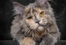Silly Cat Photos Bilder 220x150 - Silly Cat Photos Bilder