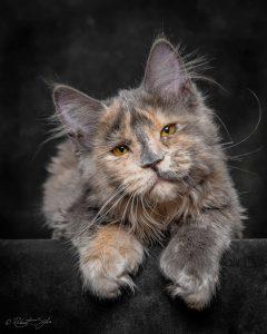 Silly Cat Photos Bilder 240x300 - Silly Cat Photos Bilder