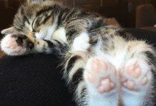 Silly Cat Pics Bilder 220x150 - Silly Cat Pics Bilder