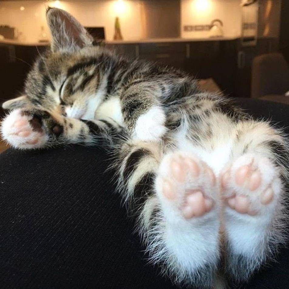 Silly Cat Pics Bilder - Silly Cat Pics Bilder