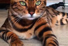 Silly Cat Pictures Bilder 220x150 - Silly Cat Pictures Bilder