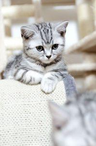Sprechende Katze 199x300 - Sprechende Katze
