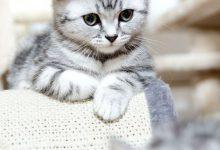 Sprechende Katze 220x150 - Sprechende Katze