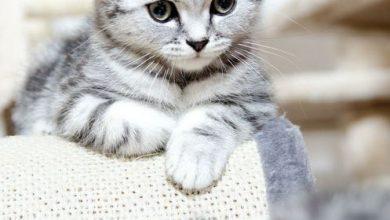 Sprechende Katze 390x220 - Sprechende Katze