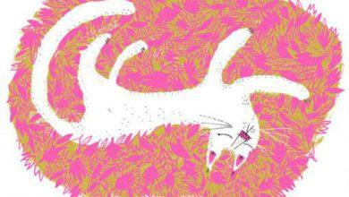 Sprechende Katze Bilder Kostenlos 390x220 - Sprechende Katze Bilder Kostenlos