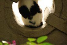 Suche Bilder Von Katzen 220x150 - Suche Bilder Von Katzen