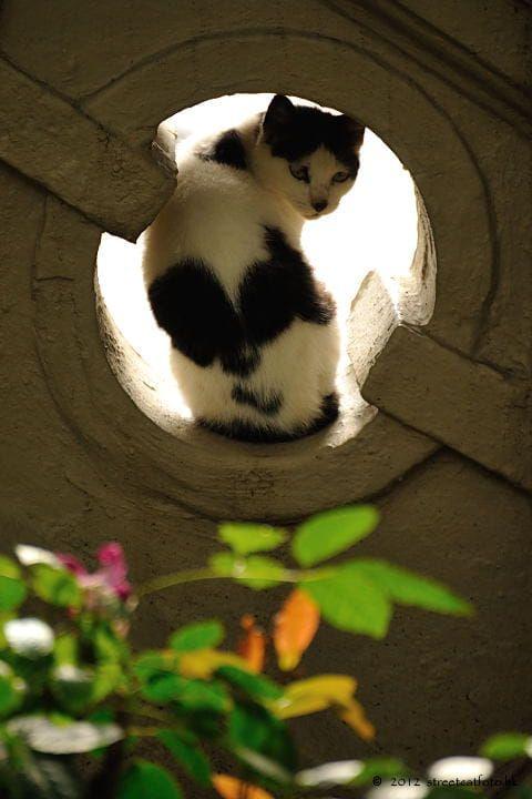 Suche Bilder Von Katzen - Suche Bilder Von Katzen