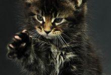 Suche Katze 220x150 - Suche Katze