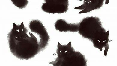 Suche Katze Gratis 390x220 - Suche Katze Gratis