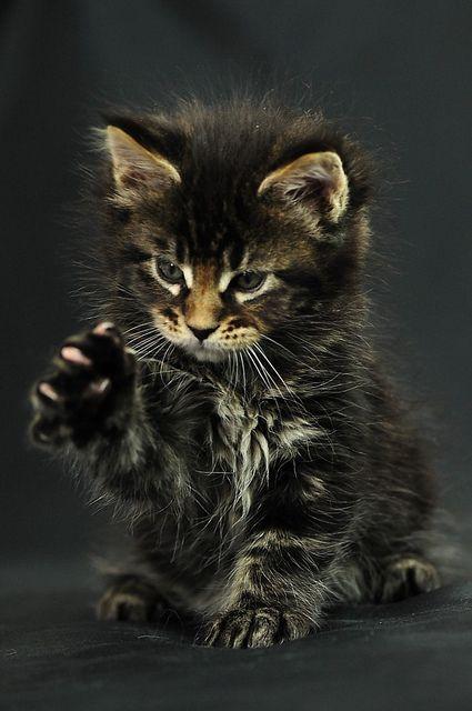 Suche Katze Kostenlos