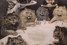 Suche Katzenbaby Kostenlos 220x150 - Suche Katzenbaby Kostenlos