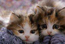 Suche Katzenbabys 220x150 - Suche Katzenbabys
