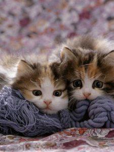 Suche Katzenbabys 225x300 - Suche Katzenbabys