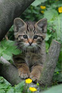 Suche Katzenbilder 200x300 - Suche Katzenbilder
