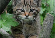 Suche Katzenbilder 220x150 - Suche Katzenbilder