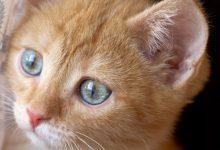 Suesse Katzen 220x150 - Suesse Katzen