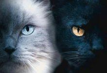 Super Cute Cat Pictures Bilder 220x150 - Super Cute Cat Pictures Bilder