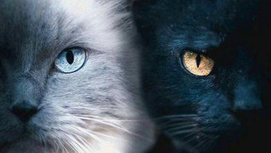 Super Cute Cat Pictures Bilder 390x220 - Super Cute Cat Pictures Bilder