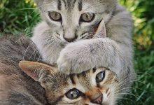 Super Funny Cat Pictures Bilder 220x150 - Super Funny Cat Pictures Bilder