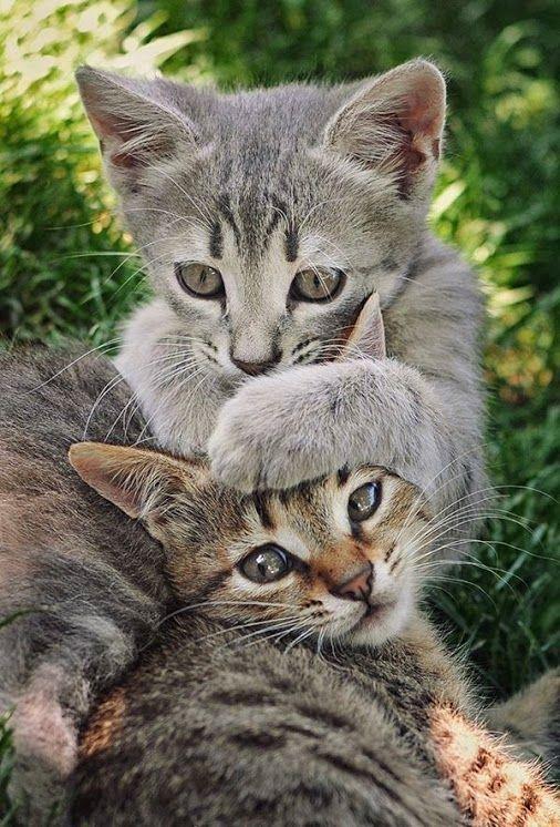 super funny cat pictures bilder  bilder und sprüche für