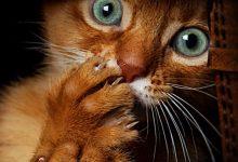 Sweet Cute Cat Images Bilder 220x150 - Sweet Cute Cat Images Bilder