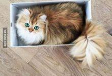 The Cat Pictures Bilder 220x150 - The Cat Pictures Bilder