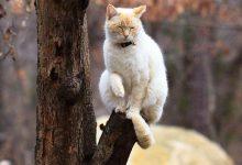 The Funny Cat Bilder 220x150 - The Funny Cat Bilder