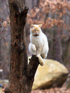 The Funny Cat Bilder 228x300 - The Funny Cat Bilder