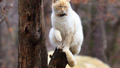 The Funny Cat Bilder 390x220 - The Funny Cat Bilder