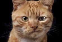 Tierbilder Katzen 220x150 - Tierbilder Katzen