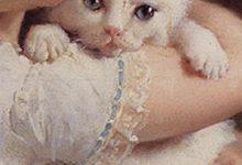 Tierhandlung Katzen Kaufen 220x150 - Tierhandlung Katzen Kaufen