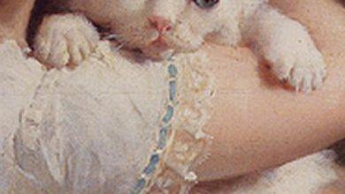 Tierhandlung Katzen Kaufen 390x220 - Tierhandlung Katzen Kaufen