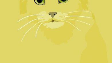 Tierwelt Katzen Kaufen Bilder Kostenlos 390x220 - Tierwelt Katzen Kaufen Bilder Kostenlos