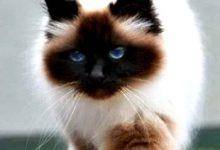 Tiger Katzen Bilder Bilder Kostenlos 220x150 - Tiger Katzen Bilder Bilder Kostenlos
