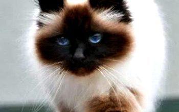 Tiger Katzen Bilder Bilder Kostenlos 350x220 - Tiger Katzen Bilder Bilder Kostenlos