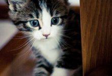 Tolle Katzenbilder 220x150 - Tolle Katzenbilder