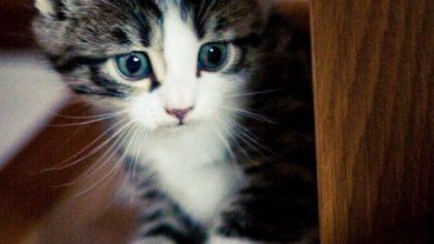 Tolle Katzenbilder 390x220 - Tolle Katzenbilder