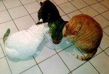Top Cat Pics Bilder 220x150 - Top Cat Pics Bilder