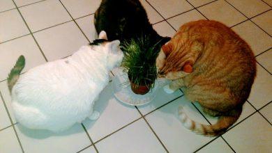 Top Cat Pics Bilder 390x220 - Top Cat Pics Bilder