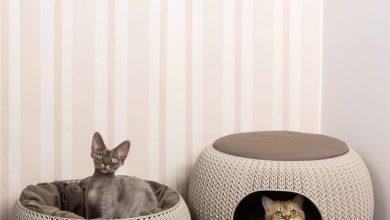 Tote Katze 390x220 - Tote Katze