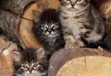 Tote Katze Bilder 220x150 - Tote Katze Bilder