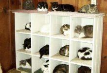 Tote Katze Bilder Bilder Kostenlos 220x150 - Tote Katze Bilder Bilder Kostenlos