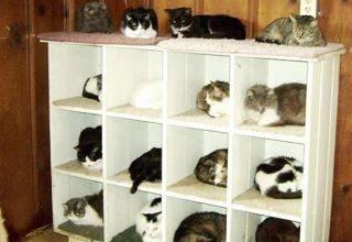 Tote Katze Bilder Bilder Kostenlos 320x220 - Tote Katze Bilder Bilder Kostenlos