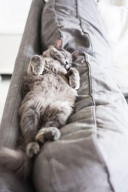 Traurige Katzenbilder | Bilder und Sprüche für Whatsapp