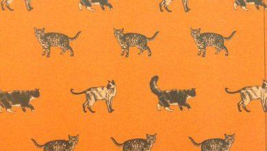 Van Katze Bilder Bilder Kostenlos 390x220 - Van Katze Bilder Bilder Kostenlos